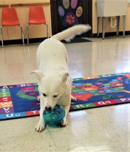 Abby with toy inside (2)