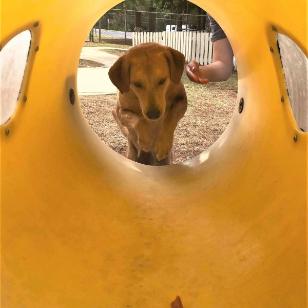 Buddy jumping in tunnel2 (2)